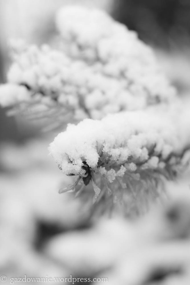 zima_2015 (27)