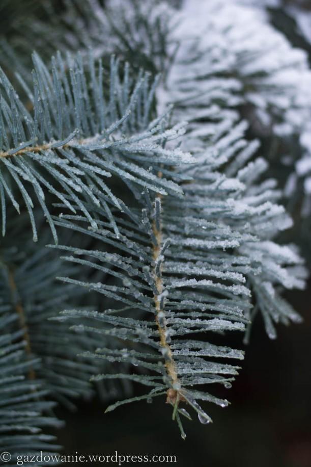 zima_2015 (5)
